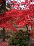 京都かと思うほどの紅葉@東神楽町