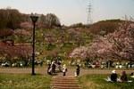 梅林 札幌市清田区平岡公園